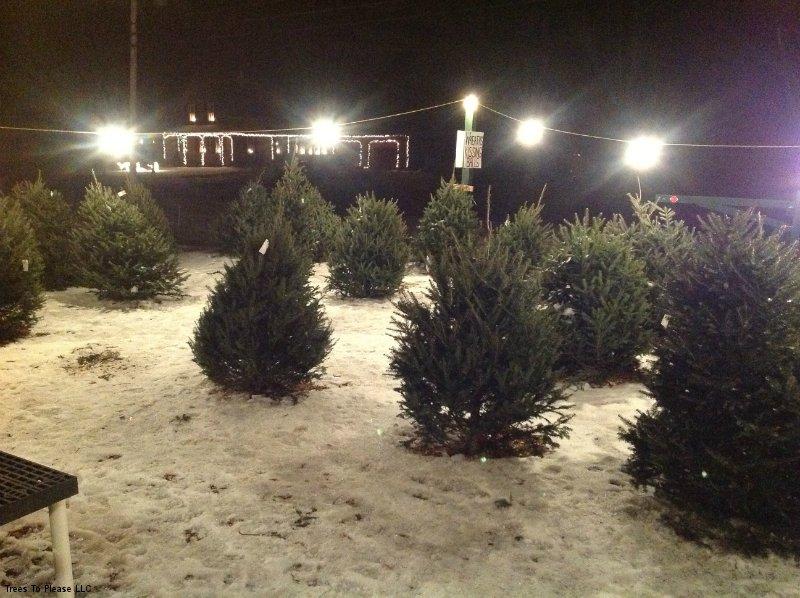 Norridgewock Precut Christmas Tree Lot Lighted