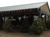 Precut Christmas Trees Under Pavilion