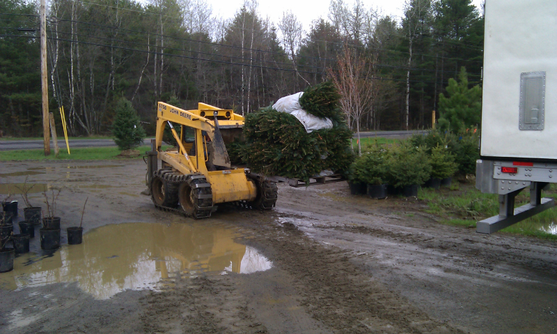Unloading Christmas Tree Seedlings