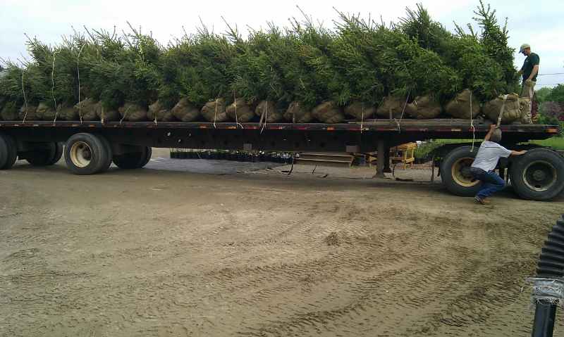 Load of Norway Spruce Trees