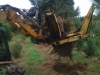 Digging a White Pine