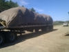 Truckload of Norway Spruce Tied Down